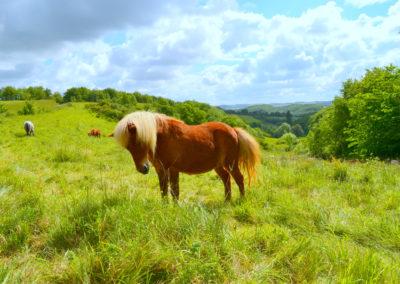 Les poneys au printemps