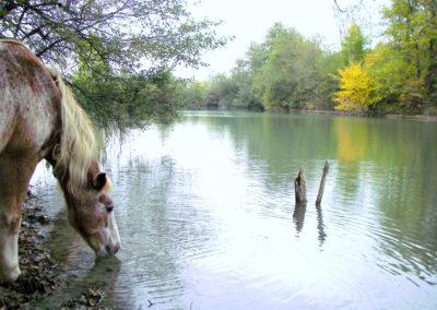 Poney au lac
