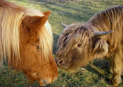Rencontre Fanfan et poney